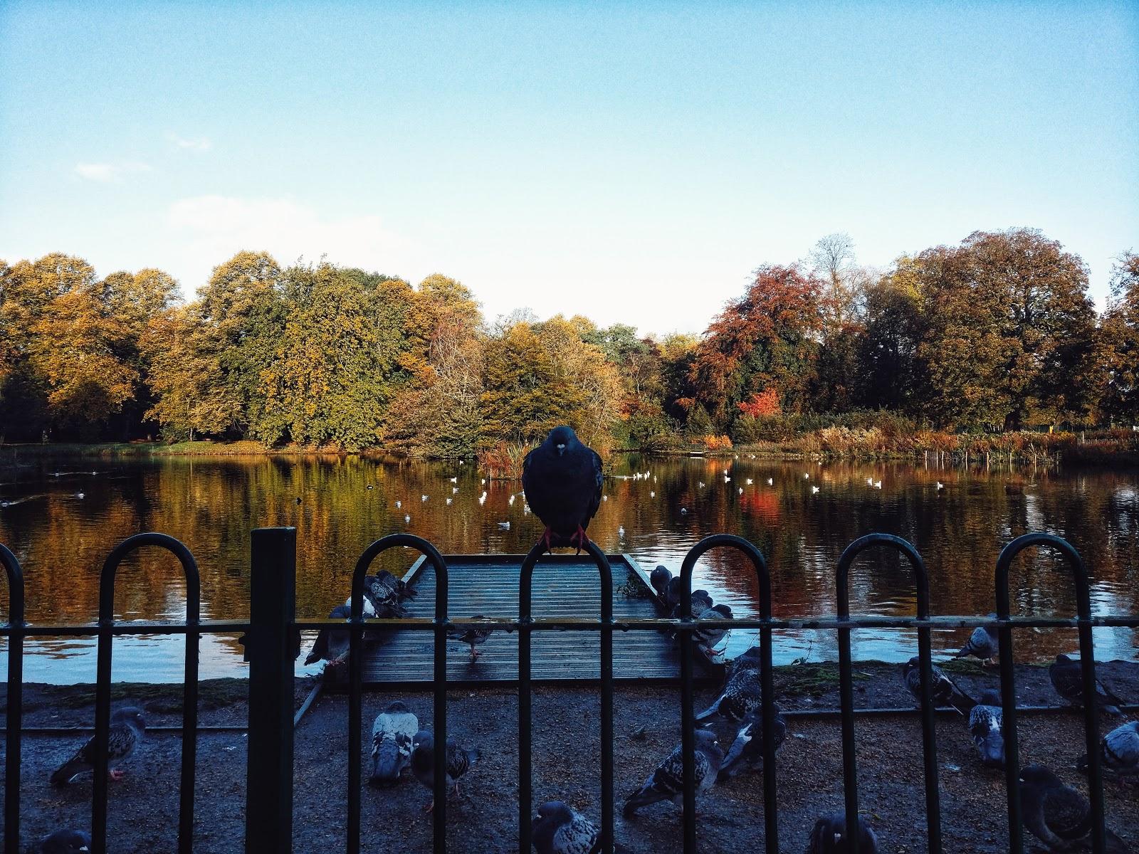 Large Pond In Park Garden